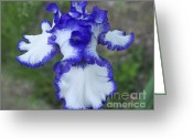 Cindy Longhini Greeting Cards - Blue Iris Greeting Card by Cindy Lee Longhini