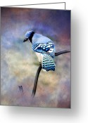 Kathy Jennings Photographs Greeting Cards - Blue Jay Blue Jay Sing Me A Song Greeting Card by Kathy Jennings