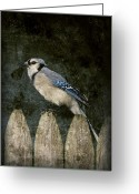 Layered Textures Greeting Cards - Blue Jay On The Fence Greeting Card by Angie McKenzie