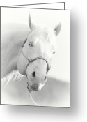 Quarter Horse Greeting Cards - Blue Greeting Card by Katie Abrams