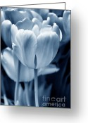 Blue Florals Greeting Cards - Blue Luminous Tulip Flowers Greeting Card by Jennie Marie Schell