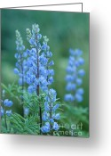 Blue Flowers Greeting Cards - Blue Lupine in the Tetons  Greeting Card by Sandra Bronstein