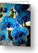 Orchids Photo Greeting Cards - Blue Monday Greeting Card by Mandy Shupp