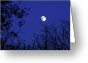 Blue Moon Greeting Cards - Blue Moon Among The Tree Tops Greeting Card by Andee Photography