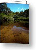 Oceania Greeting Cards - Blue Mountains waterhole Ingar lake Greeting Card by John Buxton