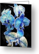 Digital Flower Greeting Cards - Blue Orchid Greeting Card by Sheena Pike