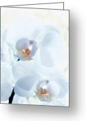 White Orchids Greeting Cards - Blue Orchidee Greeting Card by Kristin Kreet