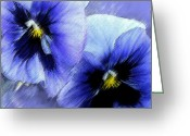 Blue Flowers Greeting Cards - Blue Pansies  Greeting Card by Jane Schnetlage