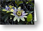 Unique Flowers Greeting Cards - Blue Passion Flower Greeting Card by Kelley King