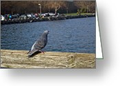 Ruston Greeting Cards - Blue Pigeon Greeting Card by Roger Reeves  and Terrie Heslop