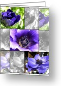Caen Greeting Cards - Blue Poppy Anemone Greeting Card by J McCombie
