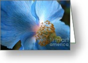 Translucent Greeting Cards - Blue Poppy Greeting Card by Carol Groenen