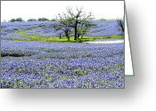 Texas Bluebonnet Greeting Cards - Blue Pride Greeting Card by Elizabeth Hart