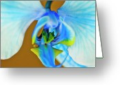 Designers Choice Photo Greeting Cards - Blue Ribbon Macro Greeting Card by Don Wright