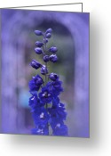 Blue Delphinium Greeting Cards - Blue Greeting Card by Richard Cummings