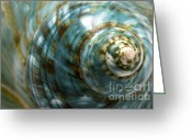 Still Life Greeting Cards - Blue Seashell Greeting Card by Fabrizio Troiani