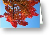 Blue Leaves Greeting Cards - BLUE SKY Red Autumn Leaves Sunlit Orange Baslee Troutman  Greeting Card by Baslee Troutman Art Print Collections