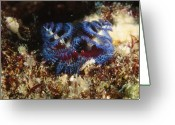 Marine Animal Greeting Cards - Blue Spiral Gilledtube Worm Greeting Card by James Forte