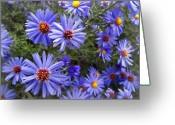 Pretty Flowers Greeting Cards - Blue Street Daisies Greeting Card by Daniel Hagerman