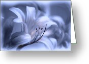Floral Print Greeting Cards - Blue Tinted Swirl Lily Greeting Card by Jim  Darnall
