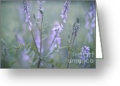 Meadow Greeting Cards - Blue Vervain Greeting Card by Priska Wettstein