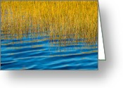 Reeds Reflections Greeting Cards - Blue Waters Golden Grass Greeting Card by Rich Franco