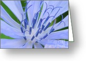 Art On Wall Greeting Cards - Blue Wild Flower Greeting Card by Paul Ward