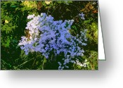 Bittersweet Digital Art Greeting Cards - Blue Wild Flowers Greeting Card by Mindy Newman