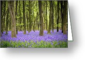 Woodland Plant Greeting Cards - Bluebell carpet Greeting Card by Jane Rix