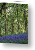 Endymion Greeting Cards - Bluebells Growing In An Oak Wood Greeting Card by Martyn F. Chillmaid