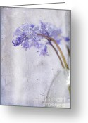 Layered Greeting Cards - Bluebells II Greeting Card by Marion Galt