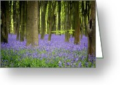 Wood Photo Greeting Cards - Bluebells Greeting Card by Jane Rix