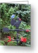 Weathercock Greeting Cards - Bluebird and Cock Facing West Greeting Card by Betty Pieper