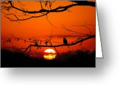 Thoughtful Greeting Cards - Bluebird Dawn Greeting Card by Bill Pevlor