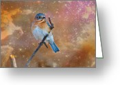Larry Walker Greeting Cards - Bluebird Perched In Space Greeting Card by J Larry Walker