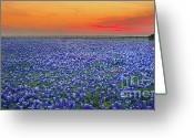 Fence Greeting Cards - Bluebonnet Sunset Vista - Texas landscape Greeting Card by Jon Holiday