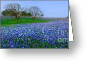 Texas Wildflowers Greeting Cards - Bluebonnet Vista - Texas Bluebonnet wildflowers landscape flowers  Greeting Card by Jon Holiday