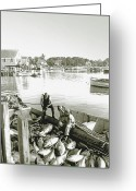 Fishermen Greeting Cards - Bluefin Tuna at Barnstable Harbor Greeting Card by Charles Harden