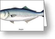 Bay Mixed Media Greeting Cards - Bluefish Greeting Card by Charles Harden