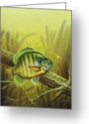 Log Greeting Cards - Bluegill and Jig Greeting Card by JQ Licensing