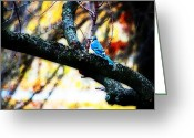 Bluejay Birds Greeting Cards - BlueJay in Watercolor Greeting Card by Simone Hester