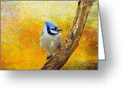 Layered Textures Greeting Cards - Bluejay Peeking Greeting Card by J Larry Walker