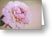Texture Flower Photo Greeting Cards - Blush Greeting Card by Diane Schuster