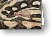 Snake Scales Greeting Cards - Boa Constrictor Greeting Card by Tom Mc Nemar