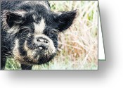 Boar Greeting Cards - Boar Greeting Card by MotHaiBaPhoto Prints