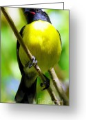Exotic Birds Greeting Cards - Boastful Bird Greeting Card by Karen Wiles