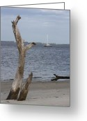 Dana Oliver Greeting Cards - Boat at Driftwood Beach  Greeting Card by Dana  Oliver