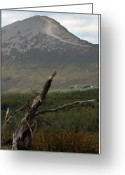Mist Posters Greeting Cards Greeting Cards - Bog wood Greeting Card by Paul  Mealey