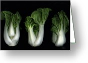 Botanicals Mixed Media Greeting Cards - Bok Choy Greeting Card by Christian Slanec