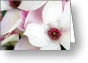 Debbie Johnson Greeting Cards - Bold and Beautiful Greeting Card by Deborah  Crew-Johnson